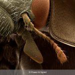 ladybird antenna