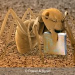 ant and microchip