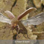 woodworm beetle