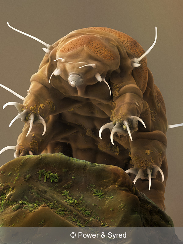 What is a Water Bear?