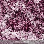 shirota bacteria