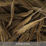 spider hairs